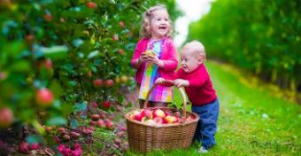 Ez�rt szoktasd r� az eg�sz csal�dot az alma ev�sre!