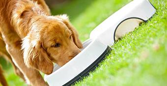 Vigyázz, mit adsz a kutyának enni