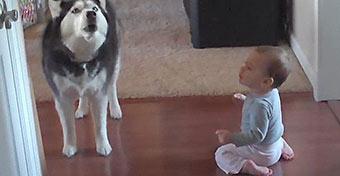 Cukiságból jeles: a husky beszélget a babával