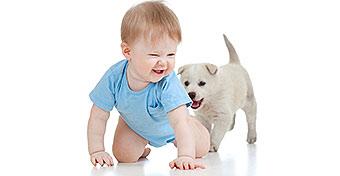 Baba és kutya egy családban? Érvek, ellenérvek, tanácsok