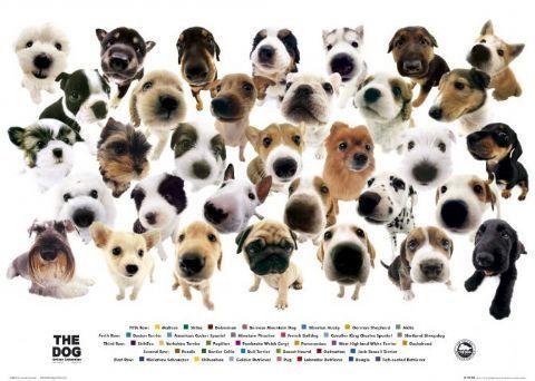 the dog jsg kutyussal egytt adok veszek frum the dog 480x342
