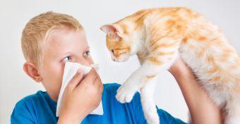 Állati szőr okozta allergiás betegségek
