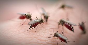 Termékteszt: szúnyog- és kullancsriasztó szerek