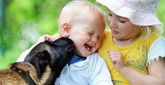 Baj, ha megnyalja a kutya a gyerek arcát?