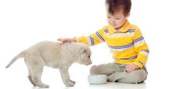Kutyát a gyereknek?