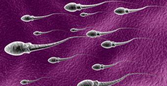 Távirányítású spermiumoké a jövő?