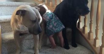 Íme a bizonyíték, hogy a kutyák a babák legjobb testőrei