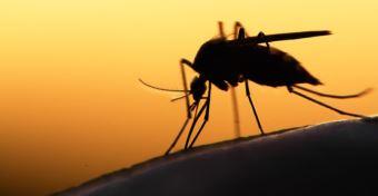 Kezdődik a szúnyoggyérítés - Mennyire veszélyes a szer?
