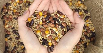 A növényi fehérje megvédhet a korai menopauzától