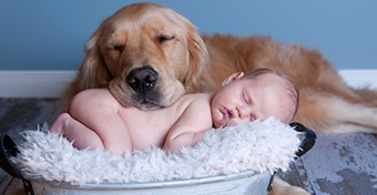 Készítsük fel házi kedvencünket a baba érkezésére!