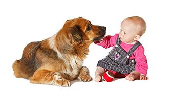 Kutya a baba mellett?