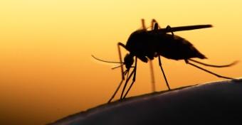 Szúnyogok miatt került kórházba egy kisgyerek