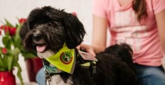 Gluténjelző kutya segíti a 10 éves cöliákiás kislányt