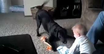 Imádnivaló babás-kutyás videó - Vigyázat, elolvadsz ha megnézed!