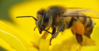 A generalizált allergia, az anafilaxiás sokk