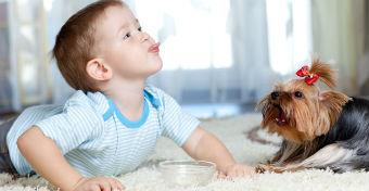 Ennyi éves gyerek szintjén vannak a kutyák