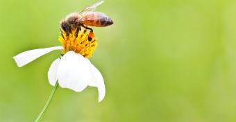 6 tipp, hogy megelőzd a méhcsípést