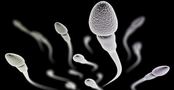 Így növelhető a spermiumszám