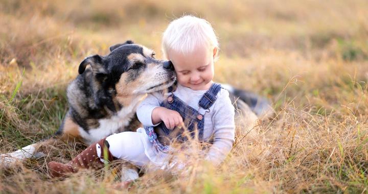 ismerd meg a kutya és a baba)