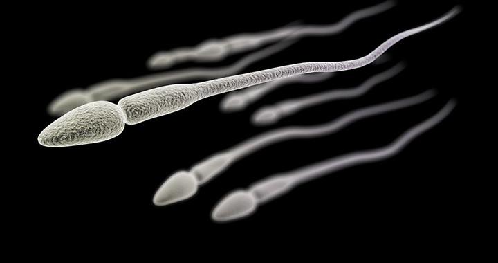 Spermium