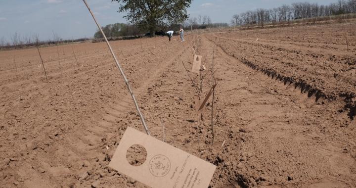 Együtt ezer fáért! - A Nosalty.hu és a Plant A Tree Cocktail közös kampánya